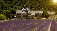Senanque Abbey, Gordes, Provence Alpes Cote DAzur, France, Europe