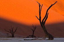 View Of Dead Acacia Tree In Clay Pan During Sunrise