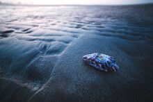 Close Up Of Seashell On Beach