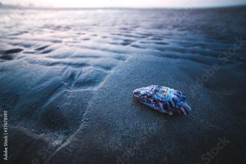 Close up of seashell on beach - 376781411