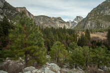 View Of Pine Trees With Half Dome In Yosemite Valley