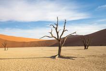 View Of Bare Trees On Desert Landscape