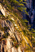 View Of Huangshan Pine Trees O...