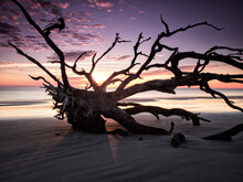 View Of Driftwood On Beach By Atlantic Ocean During Sunrise