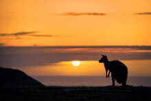 Silhouette Of Kangaroo Against Sky During Sunset
