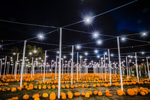 Pumpkins For Sale Outdoors At Night
