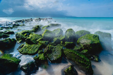 View Of Moss Covered Rocks On ...