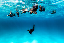 Group Of Sea Lions Playing In ...
