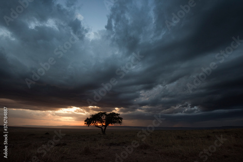 View of tree against stormy clouds during sunset - 376784887