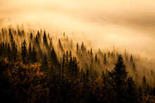 View Of Misty Sunrise In Forest
