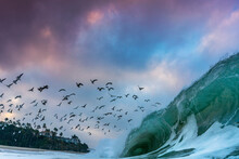Birds Flying Over Wave Splashi...