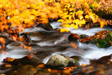 View Of Creek With Autumn Leav...