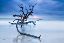 View Of Drift Wood On Beach During Sunrise