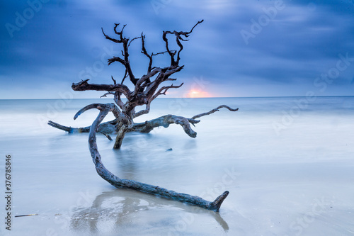View of drift wood on beach during sunrise - 376785846