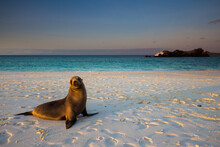 Sea Lion On Beach In Galapagos Islands