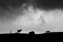 Reindeer On Landscape Against Cloudy Sky