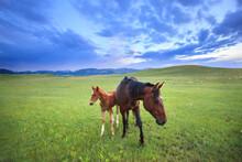Horses Standing On Grassy Land...