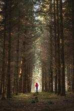 Man In Red Coat Hiking Through...