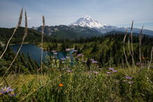 Mount Rainier Rising Above Alpine Lake Surrounded By Wildflowers On Tolmie Peak