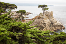 View Of Lone Cypress By Pebble Beach