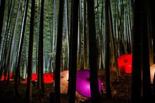 The Bamboo Forest Illuminated ...