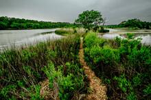 Swamp Path In Wildlife Preserv...