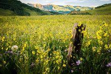 Scenic View Of Wildflowers In ...