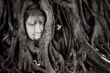 View Of Buddha Head Embedded I...