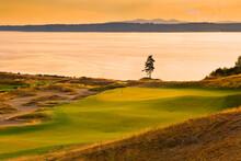 Fir Tree In Chambers Bay Golf ...