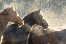 Close Up Of Wild Horses Standing Outdoors