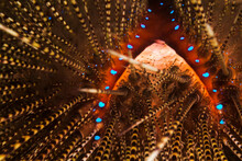 Close Up Of Sea Urchin