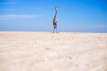 Egret Standing On Beach
