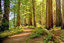 Scenic View Of Jedediah Smith Redwoods State Park