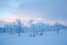 View Of Frozen Trees On Snowy Landscape Against Sky
