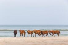 Wild Horses Walking On Beach
