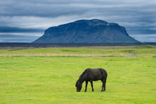 Black Horse Grazing On Field With Volcano In Background