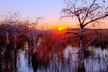 View Of Everglades National Park During Sunrise