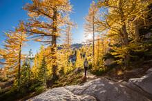 Man Walking On Trail In Alpine...