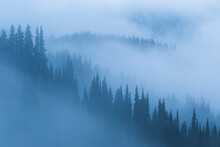 Mist Over Trees In Forest