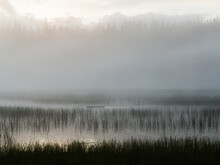 Scenic View Of Foggy Marsh Along Pacific Crest Trail
