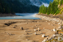 Tree Stumps Exposed By Lowerin...