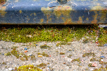 Rusty Cast Iron Rod, Old Weathered Concrete Surface Covered With Green Moss