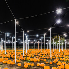Pumpkins For Sale At Night