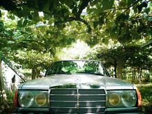 Vintage Car In A Vineyard