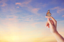Woman Holding Beautiful Monarch Butterfly Against Sunset Sky, Closeup