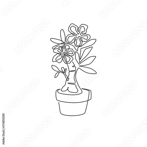 Fototapeta One single line drawing of fresh beauty potted adenium for garden logo. Printable poster decorative desert rose flower concept for wall home decor. Continuous line draw design vector illustration obraz