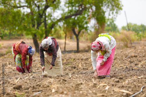Fotografija Indian lady working at field