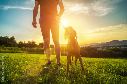 Fototapeta Silhouettes of runner and dog on field under golden sunset sky in evening time. Outdoor running. Athletic young man with his dog are running in nature.  obraz