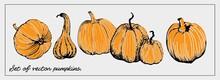 Set Of Vector Pumpkins. Graphi...