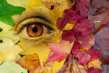Eye In A Background Of Autumul Leaves. Earth, Environment, Living Nature Personification Concept. Surreal Digital Collage.